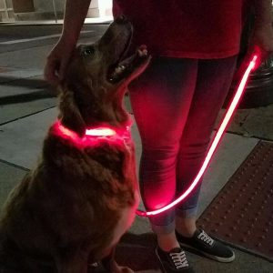 Illuma Collar Rechargeable Dog Collars Leashes