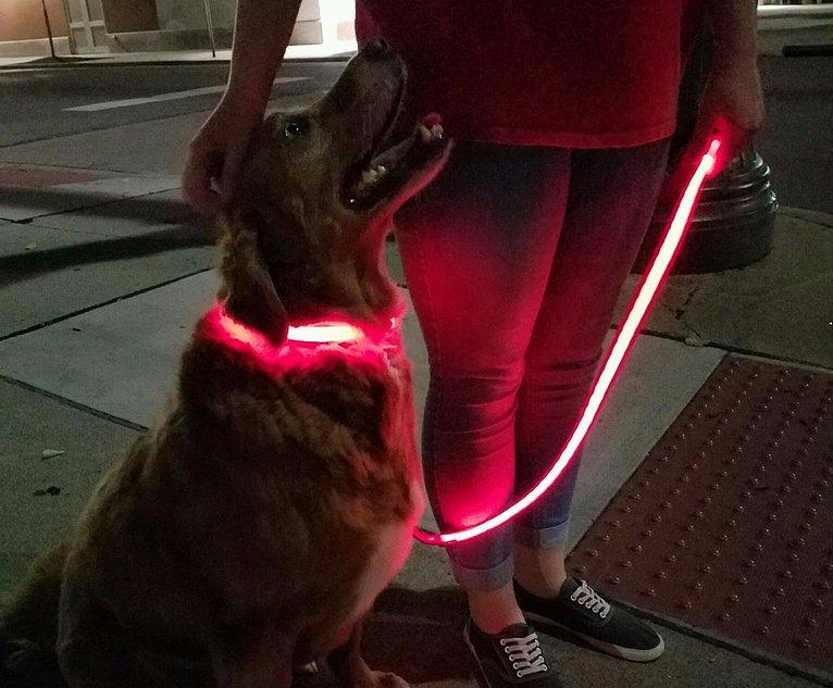 Illuma Rechargeable Dog Collars Leashes