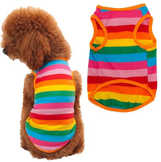 Dogo Rainbow Dog Tank
