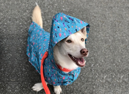 RC Pet Products Packable Shoal Dog Rain Poncho