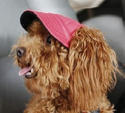 TailUp Dog Colorful Baseball Cap