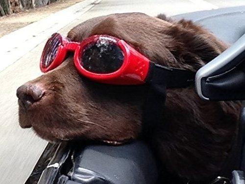ILS Shiny Doggle