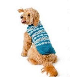 Chilly Dog Teal Fair
