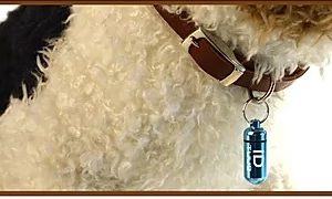 Goli Design Pet ID TUUB