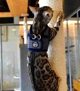 Catspia Cat Navy Harness